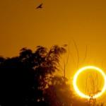dykstra-roswell-eclipse-bird