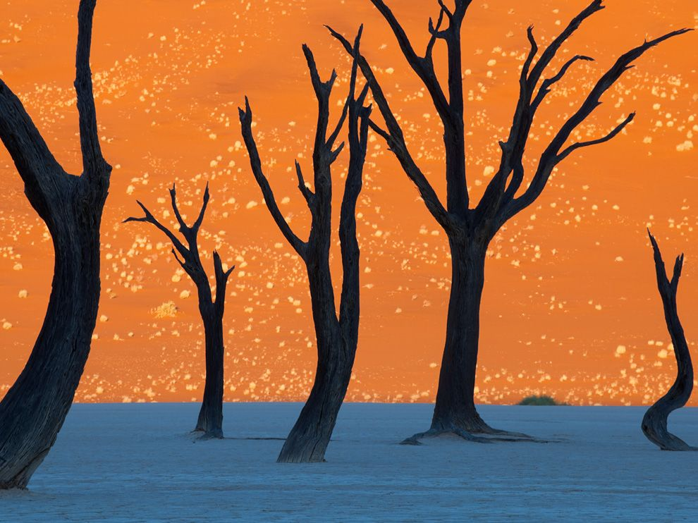 Camel thorn trees-Namibia (Frans Lanting/National Geographic)