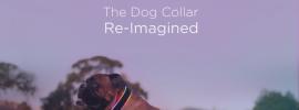 Buddy the Geeky Dog Collar