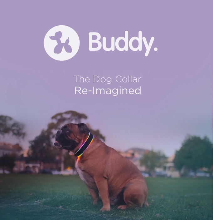 Buddy the Futuristic Dog Collar
